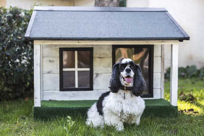 Read more about the article Complete Guide to Dog Houses, Crates & Beds